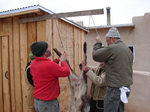Hanging the carcass in place.