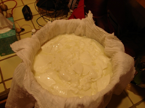 All the curd and whey is transfered and the whey is draining.