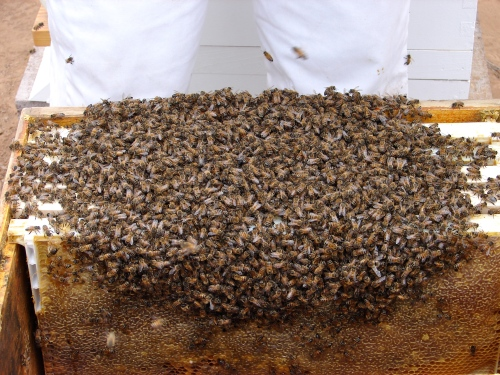 Um, that would be approximately 10,000 bees.